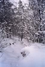 Winter/54038/maarn-1994 Maarn 1994.